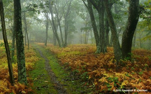 """On Hogback in a Cloud"" captured on the Appalachian Trail in Late September"